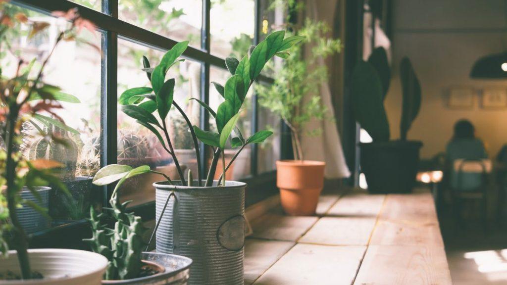 Lista traz 5 plantas para ter em casa que vão te ajudar a limpar e purificar o ar do ambiente, mantendo a saúde dos pulmões muito mais elevada.