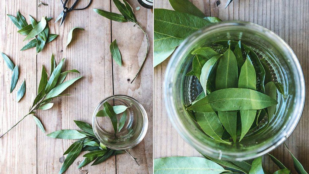 Poderoso remédio caseiro para gripe e gases com 2 ingredientes simples de encontrar, a cachaça e a folha de louro, que têm efeito positivo quando unidas.