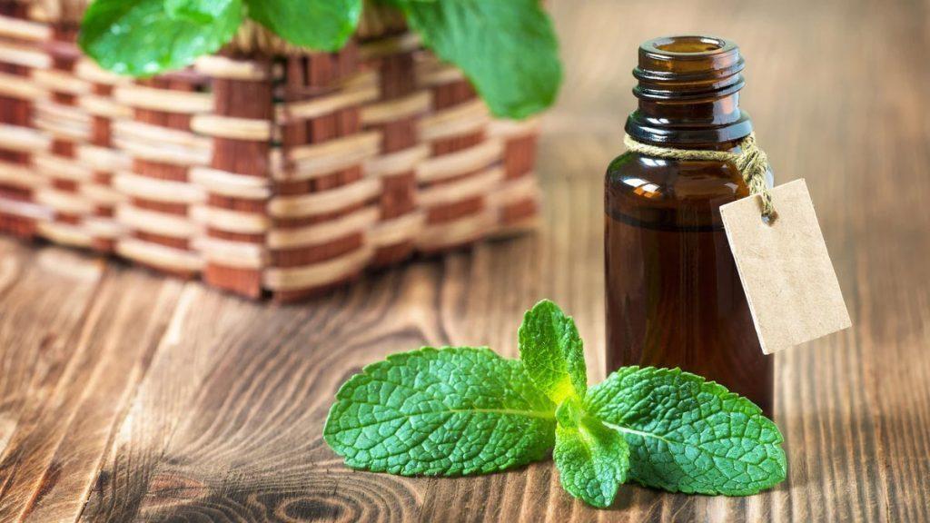 Faça seu óleo de hortelã para tratar gripe, enxaqueca e dores diversas realizando a massagem nas regiões afetadas e retomando a sua saúde.